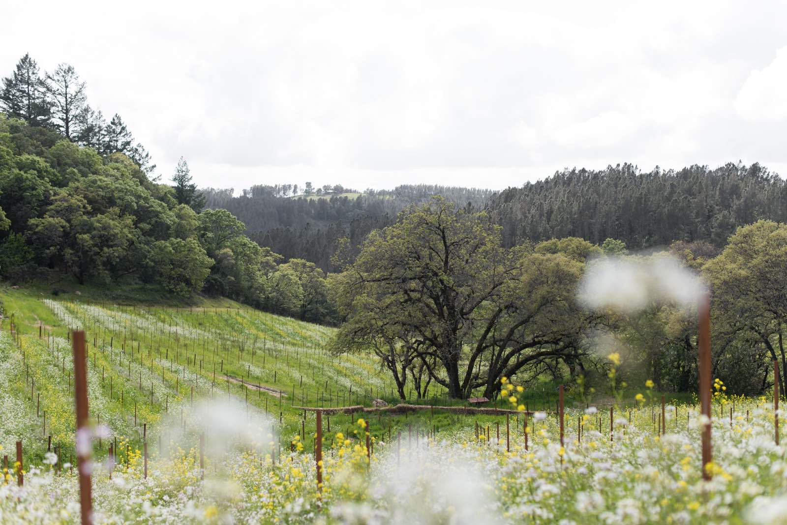 >The Meadow, 2017 - Mayacamas Vineyards